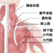 PT楠貴光の臨床家ノート 肩甲骨の機能を運動学的に考える その21   大、小菱形筋の効果的なストレッチング